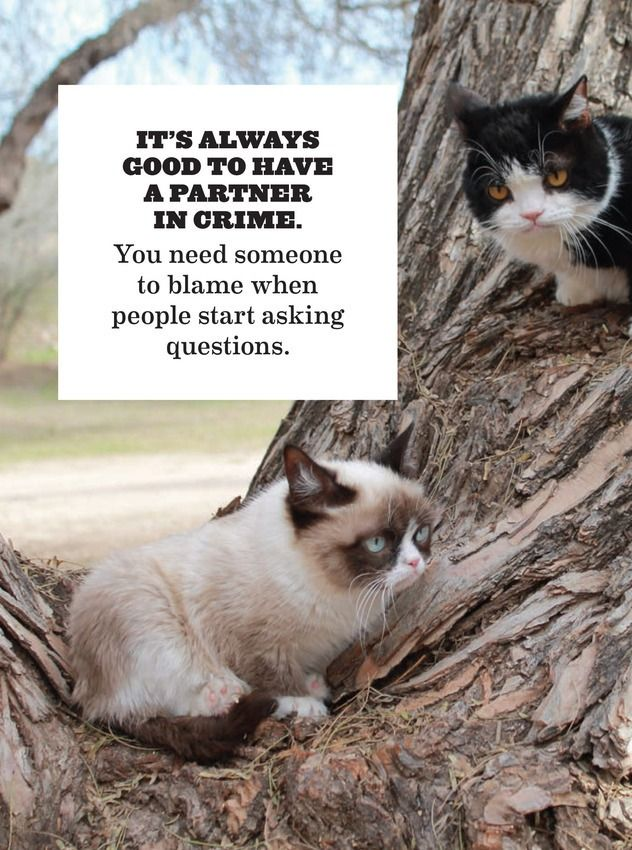 Grumpy Cat's 'Guide to Life' Coming to Bookshelves  - July 2014 - #Tard #GrumpyCat #TardarSauce: Cats, Animals, Quotes, Stuff, Partners In Crime, Grumpy Cat Meme, Friend, Cat Memes