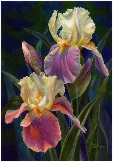 Have learned to treasure Irises, a rather forgotten flower... lovely as orchids and roses.f: Treasure Irises, Hervin Watercolor, Art Watercolors, Art Paintings, Art Flowers Detail, Watercolor Irises, Iris Watercolour, Watercolor Florals, Flowers Art