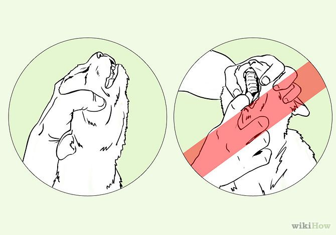 How to Save a Choking Cat: 8 Steps - wikiHow: Choking Cat, Kitty Cats, ️Cats ️, Life Cats, Aid, Cats Co, ️ ️ ️Cats, Animal