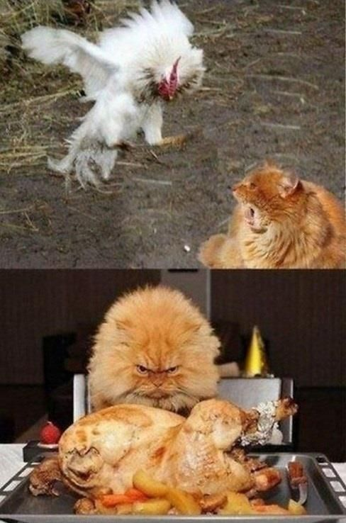View All - Funny Animal Pictures With Captions - Very Funny Cats - Cute Kitty Cat - Wild Animals - Dogs: Cats, Animals, Kitty Cat, Funny Stuff, Funnies, Humor, Funny Animal, Things