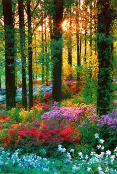 Forest flowers - Germany: Forests, Nature, Color, Beautiful, Places, Flower Forest, Photo, Garden