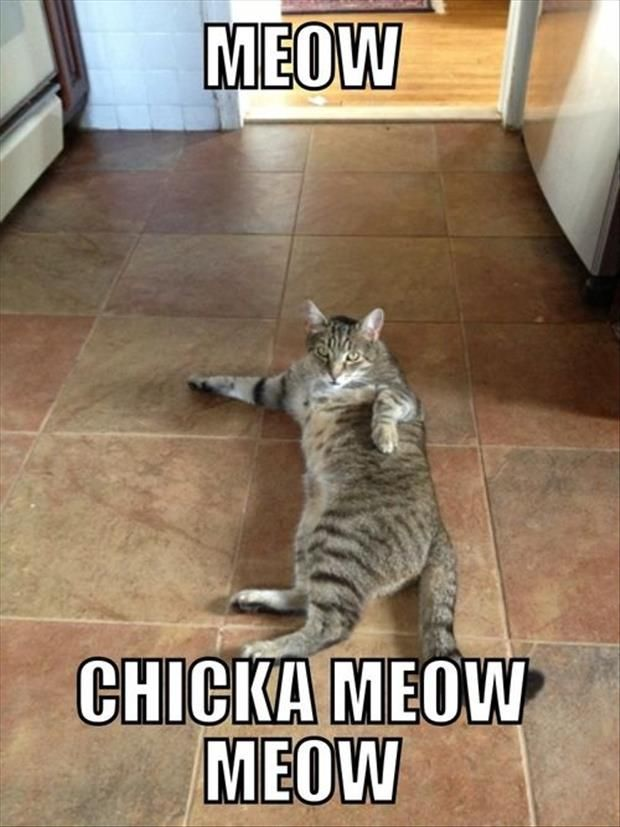 Funny Pictures Of The Day – 47 Pics: Cats, Animals, Chicka Meow, Meow Chicka, Funny Cat, Meow Meow, Funny Stuff, Funnies