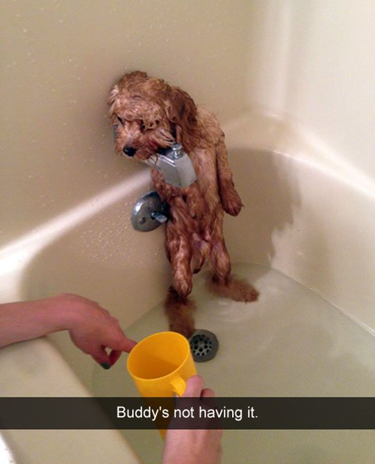 I can't stop laughing. I just keep looking and keep dying every time. His feet are fluffy under the water and the look on his face!!!!: Funny Animals, Dogs, Funny Pictures, Bathtime, Poor Baby, Bath Time