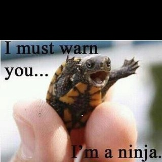 This reminded me of our turtle, Sparkle! lol: Animals, Funny Stuff, Things, Ninjas, Ninja Turtles, Funnie