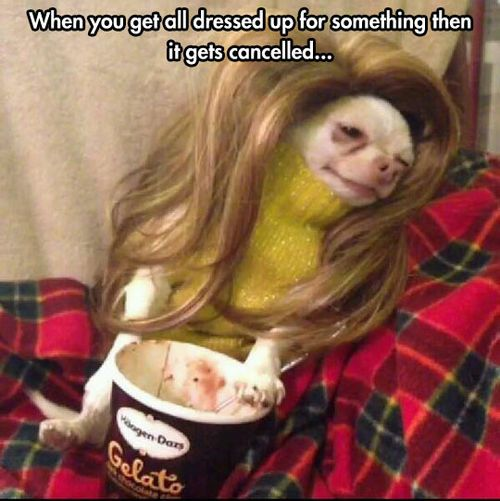 """""""I even turned into a dog for these plans..."""" @joy mallory @Meaghan: Animals, Giggle, Funny Pictures, Funny Stuff, So True, Funnies, Humor, Chihuahua"""