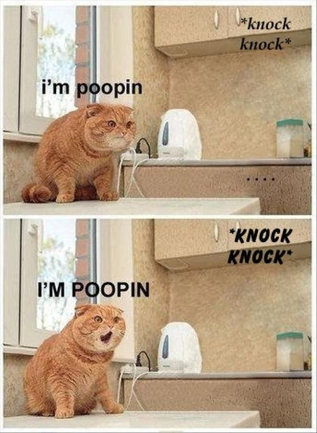 Funny Pictures – 70 Pics: Cats, Animals, False Alarm, Funny Stuff, Humor, Funnies, Things, Funny Animal