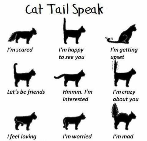 "Kitty Speak. We call that last one ""Christmas tree tail"" lol: Cats, Animals, Cat Tails, Pets, Crazy Cat, Kitty, Tail Speak, Cat Lady"