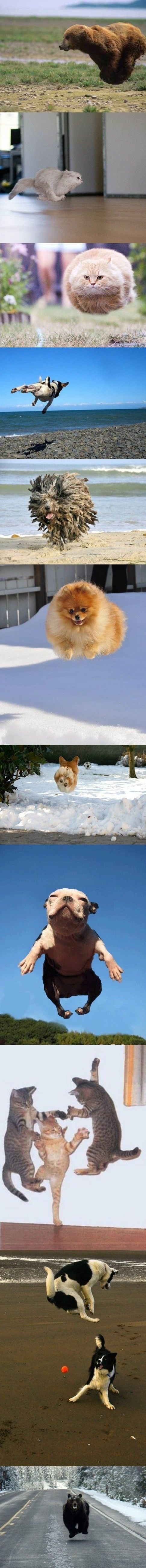 Airborne Pets & Animals. #pets #animals #funnypets: Cat, Hover Animals, Funny Stuff, Hoveranimals, Things, Funny Animal, Flying Animals, Smile