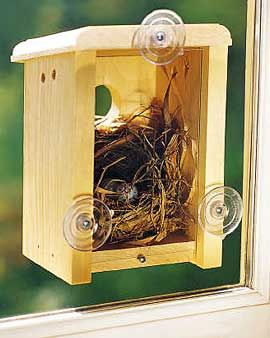 Backless birdhouse with suction cups for the window - You get to see the baby birds hatch: Birdhouses, Craft, Kitchen Window, Gardening Outdoor, Window Nest, Bird Houses, Birds, Kid