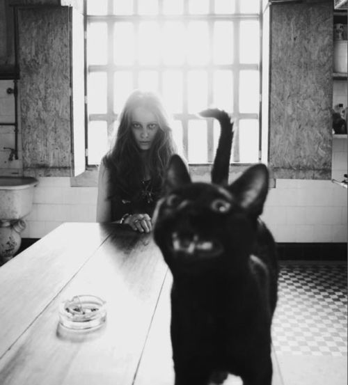 can't even tell who is photobombing...you creepy creepy death girl in the background.: Photos, Meow, Black Cats, Crazy Cat, Blackcats, Photography, Animal, Cat Lady