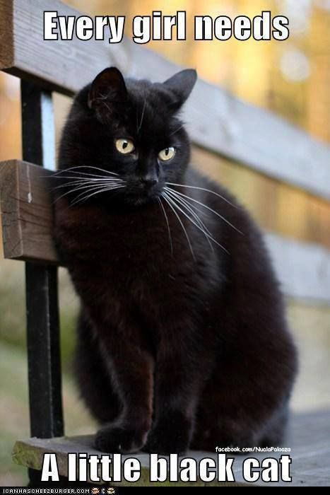 every girl needs a little black cat =^..^= I miss my first cat who was all black with green eyes: Every Girl, Animals, Black Kitty, Black Cats, Pets, Crazy Cat, Beautiful Black, Blackcats, Cat Lady