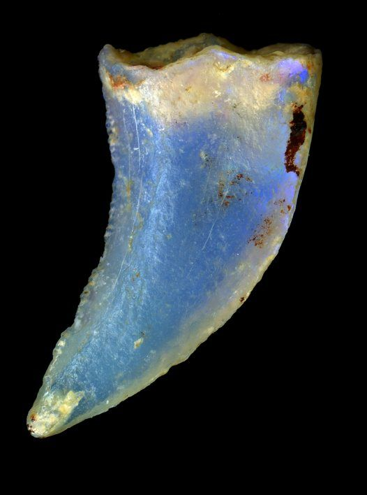Opalized dinosaur tooth (Australian Museum) ~ also this site is excellent for explaining in very clear terms the science behind gems, minerals --  clarity, why opals have 'fire', etc.: Opalized Dinosaur, Mineral, Fossil, Lightning Ridge, Dinosaurs