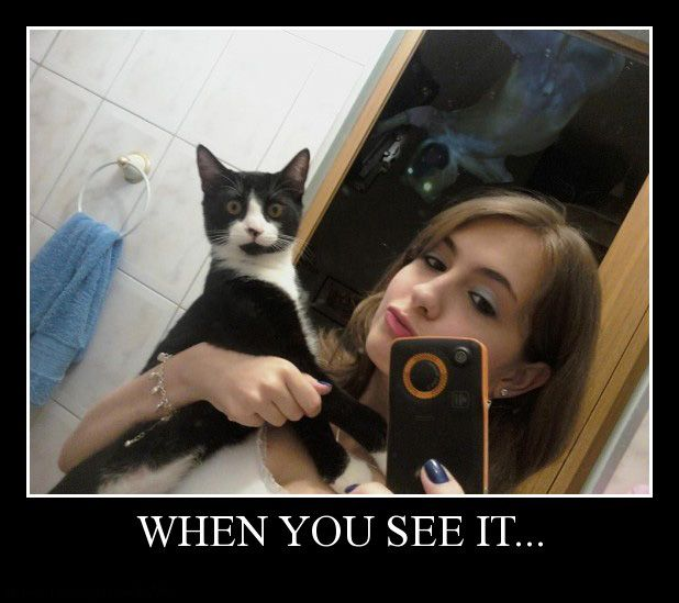 When You See it: Post Apparently kitty does.: Scary, When You See It, Random, Funny, Dog, Animal, Cat Sees