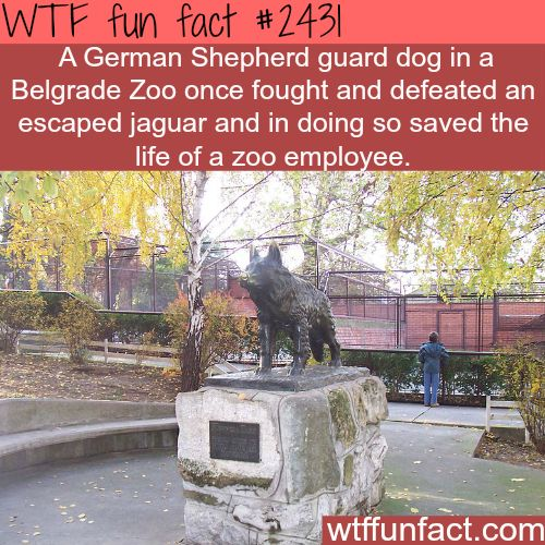 Why dogs are man's best friend? - WTF fun facts: Wtf Facts, Wtf Funfacts, Dogs, Best Friends, Stuff, Wtf Fun Facts, I Funfacts, Wtffunfacts, Facts Fun Strange