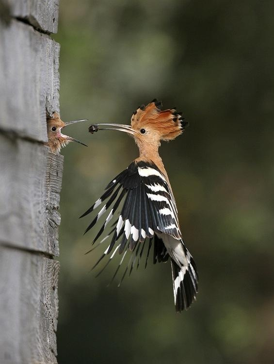 wow. nature is absolutely amazing. preserve it.: Photos, Animals, Mother, Nature, Creature, Beautiful Birds, Baby, Photography
