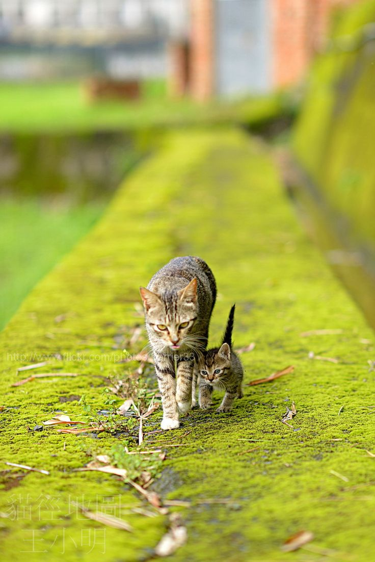 Adorable Mama and baby ♥: Big Cat, Kitty Cats, Animals, Dsc 6448 Barrier33, Meow, Kitty Kitty, Chat, Photo, Baby Cats