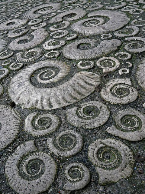 Ammonite pavement in Lyme Regis, Dorset, Great Britain, a World Heritage site. This is beautiful.: World Heritage Sites, Nature, Ammonite Pavement, Lyme Regis, Fossils, Ammonite Fossil, Britain, Dorset