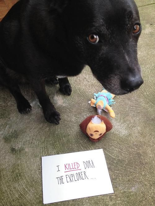 Dog shaming: Animals, Dog Shaming, Killed Dora, Funny Stuff, Funnies, Funny Animal, Pet Shaming