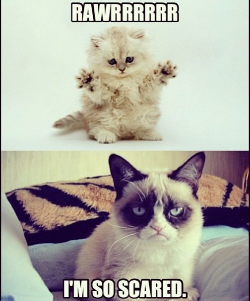 Grumpy Cat humor ...For more funny pics and hilarious memes visit www.bestfunnyjokes4u.com/rofl-funny-pic-of-the-day-8/: Cats, Funny Things, Grumpycat, Funny Stuff, Humor, Funny Grumpy Cat, Grumpy Cat Meme, Animal