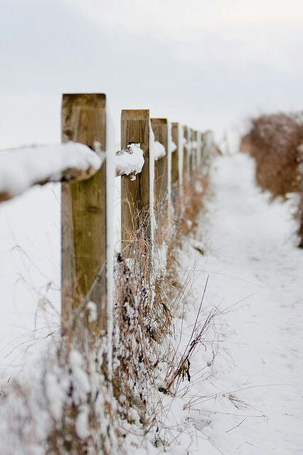 I can feel the cold. Beautiful.: Winter Snow, Photos, Snowy Fence, Winter Wonderland, Country Fences, Photography
