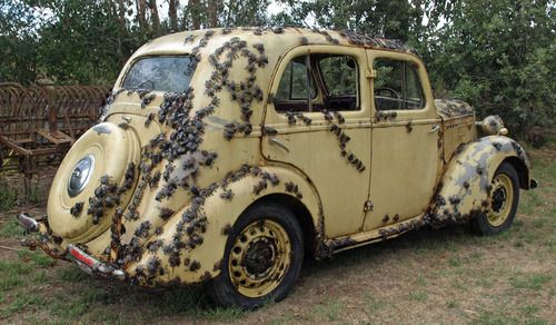 Let's take the Nope Mobile: Funny, Hilarious Cars, Nopemobile, Nope Mobile, Cars Lachen, Classic Cars Trucks, Mobile