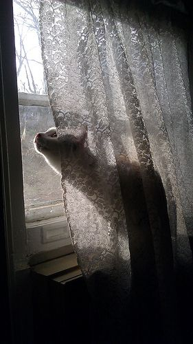 A kitty taking up her window post from behind the sheers --- looks likes she's spotted something interesting.: Cats 07, Kitty Cats, Cats View, Windows Cats, Window Cats, Cats Board, Kat