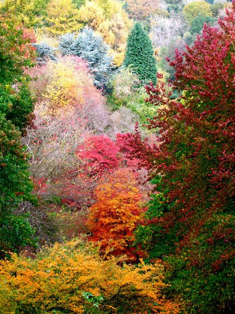 A riot of colour at Winkworth Arboretum in Godalming, Surrey, England (by Geoffrey Swaine): Nature, Color, Beautiful, Surrey Picture, Autumn Colours, Riot, Geoffrey Swaine
