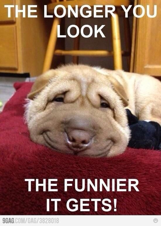 gosh I can't wait for a furry little friend to make me smile like this one did!: Face, Animals, Dogs, Pet, Funny, Funnies, Smile