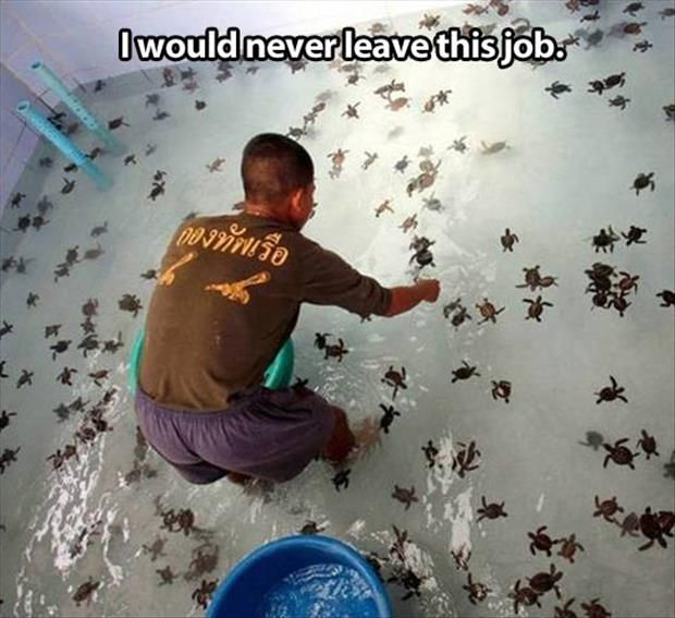 Oh my gosh!!!: Babies, Bucket List, Animals, Seaturtles, Dream Job, Funny, Things, Baby Turtles, Baby Sea Turtles
