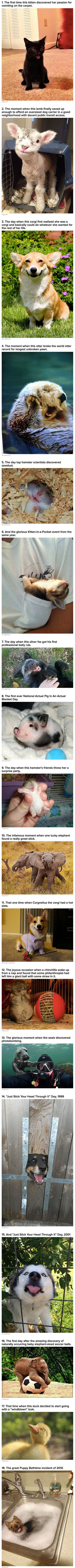 We have rounded up a few geeky animals who have discovered true happiness.: Cutest Animal