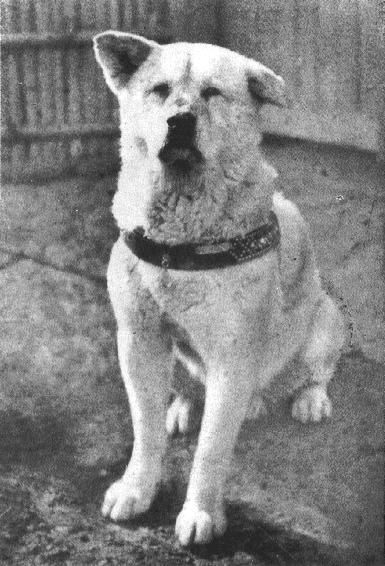 "Hachiko: A Dog's Loyalty Knows No Boundaries. They made this true story into a beautiful movie called ""Hachi"": Akita Dog, Best Friends, Animal Training, Dogs, Akita Inu, Akita S, Akita Love, Akitas 3, Faithful Akita"