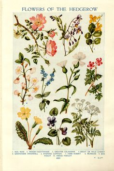 Vintage Botanical Prints - Flowers of the Hedgerows love the colours. Love the flowers. Inspired!!!