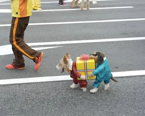 a dog dressed as two dogs carrying a present. still laughing.: Animals, Dogs, Halloween Costumes, Pets, Dog Costumes, Funny Stuff, Funnies