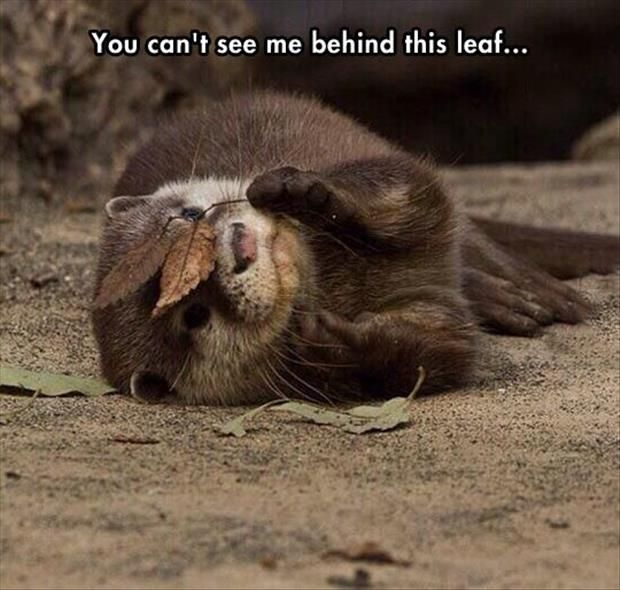 Attack Of The Funny Animals - 30 Pics: Can T, Animals, Creature, Cant, Otters, Funny, Leaves, Otterly Adorable