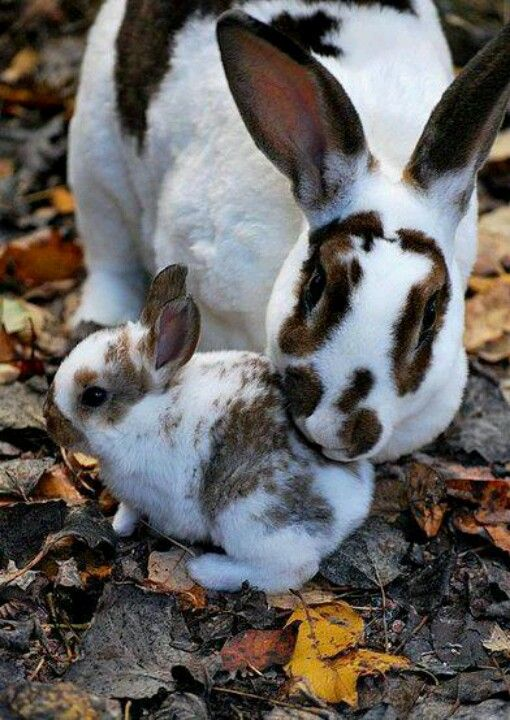 beautiful Mom and baby...: Rex Rabbits, Bunbun, Baby Bunnies, Baby Rabbit, Animal