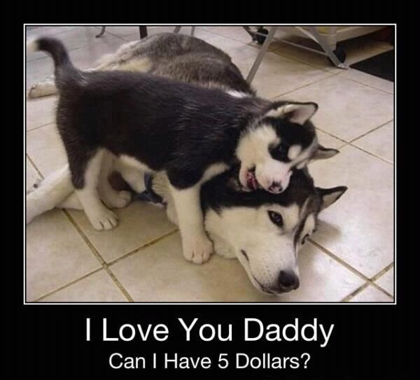 Funny husky dogs - http://jokideo.com/: Animals, Love You, Dogs, Pet, Funny, Husky, Puppy