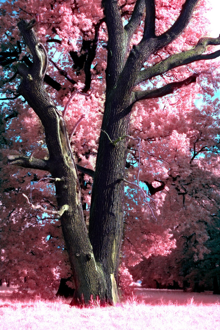 Hopes are planted in friendships garden where dreams blossom into priceless treasures.: Spring Blossom, Pink Trees, Friendships Garden, Priceless Treasures, Beautiful Nature, Dreams Blossom