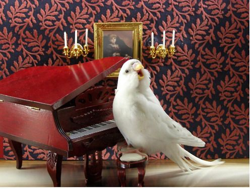 how adorable!!! If only we can get our hands on tiny furniture! and can Parakeets pose? haha: Funny Animals, Music, Parakeets, Stuff, Budgies, Plan, Pet, Birds