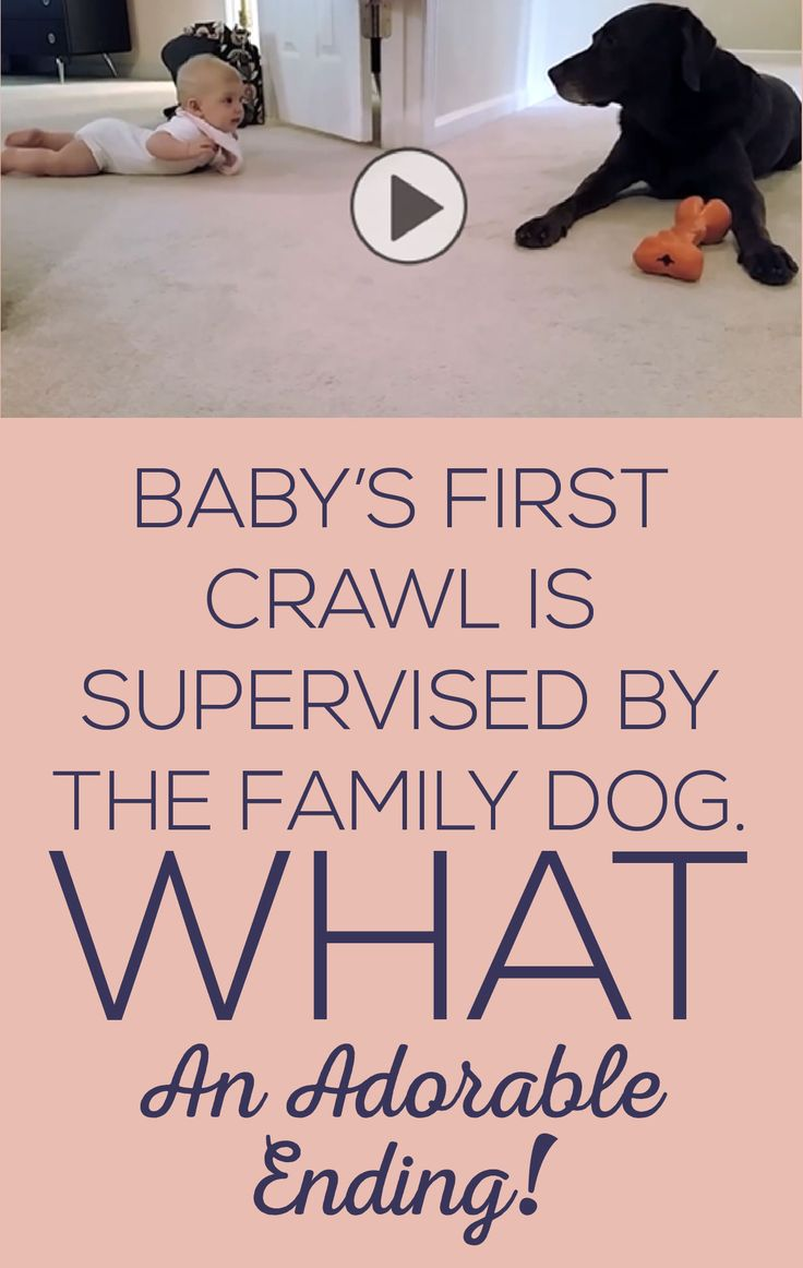 Baby's Frist Crawl is Supervised By The Family Dog. What an ADORABLE Ending!!!: Adorable Dogs, Watch Dogs, Dogs And Kids, Animal Videos, Videos Of Animals, Babies And Dogs, Friend