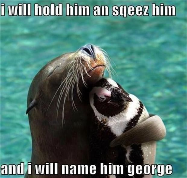 Funny Animal Pictures – 60 Pics. Amber you need to scroll through these, you'll see why. Alex, originally pinned it for you.: Seals, Animals, Friends, Hug, Pet, Sea Lion, Penguins, Things, Funny Animal