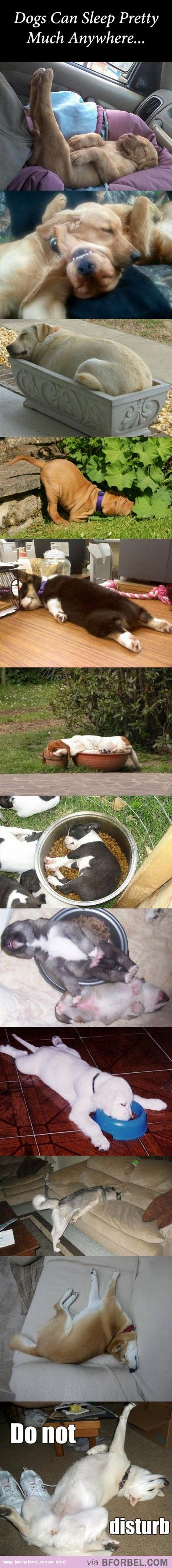 I love dogs: Funny Animals, Puppy Dogs, Dog Sleeping, Dogs Sleeping Funny, Puppys, 12 Dogs, Friend