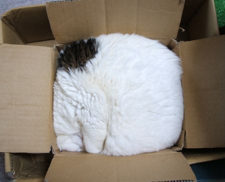 Cat in a box: Cats, Fit, Animals, Funny Cat, Boxes, Catrar, Kitty, Funnie