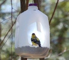 Milk Jug Bird Feeder: Ideas, Homemade Bird Feeder, Milk Jug, Bird Feeders, Birds