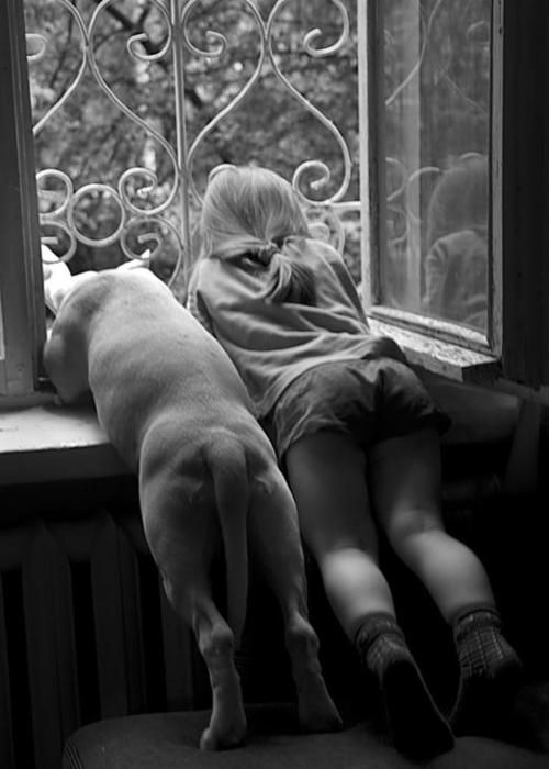 watching the world go by, with your best friend...: Photos, Animals, Dogs, Best Friends, Window, Pet, Children, Kids, Photography