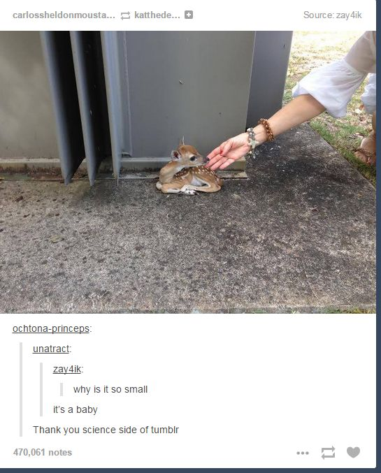 Wt: Hilarious Tumblr Post, Baby Deer, Funny Tumblr Posts Comments, Cutest Things, Science Side, Funny Baby, Animal