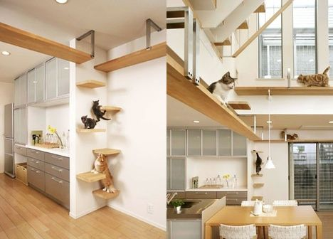 A house designed for cats :) they have staircases up the wall!!!: Cats, Idea, Pet, Crazy Cat, Cat Stuff, Cat House, Design, Cat Lady, Animal