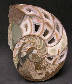 Ammonite, fossil. Via http://www.flickr.com/photos/theherbert/4472848861/: Fossil Ammonite, Sea Shells, Nature, Iridescent Ammonite, Fossils, Ammonite Fossil, Beautiful Fossil, Opalised Ammonite