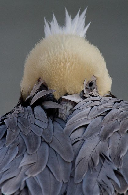 Beautiful....: Animals, Nature, Peek A Boos, Beautiful Birds, Photo, Pelican, Eye