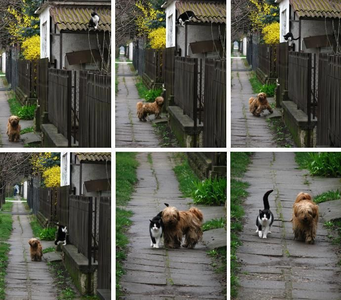 Every day - at the same time - she waits for him...  He comes... and they go for a walk ❤: Picture, Cats, Time, Animals, Dogs, Best Friends, Walks, Pet