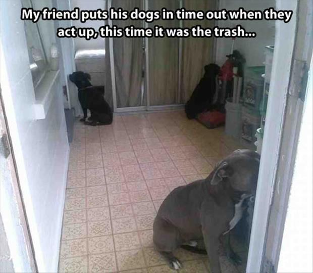 Funny Pictures Of The Day – 79 Pics: Animals, Dogs, Pitbull, Time Out, Pit Bull, Funny Animal, Timeout